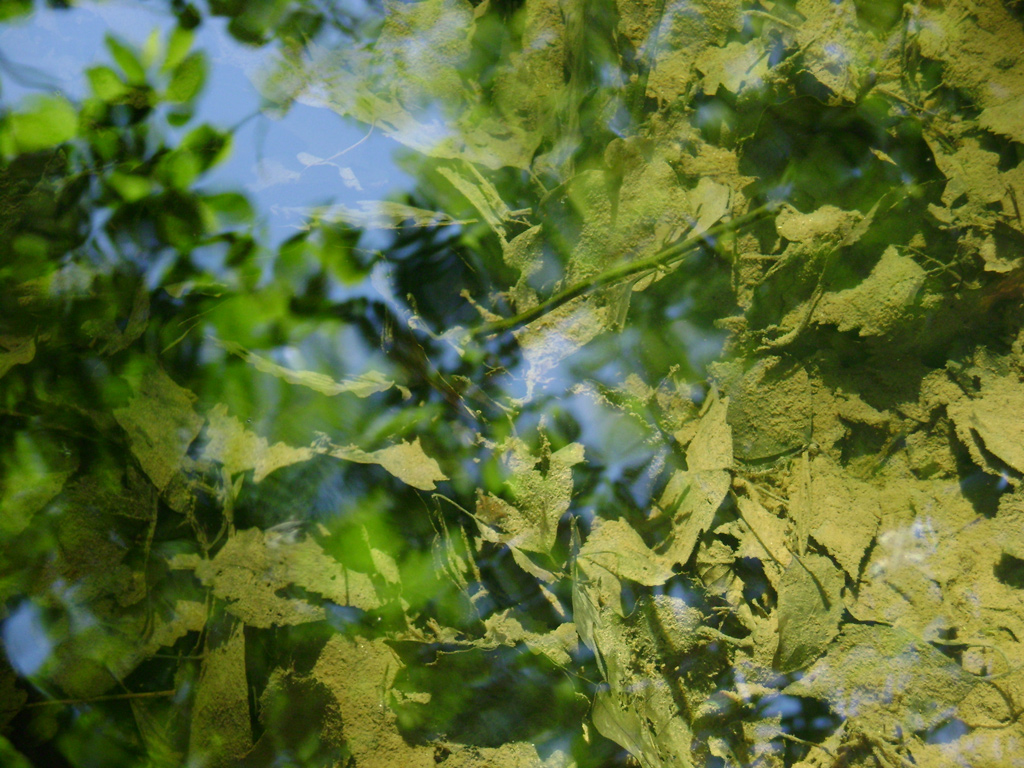 forest-mirror.jpg