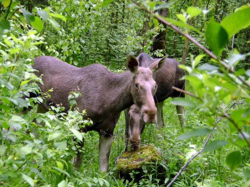 советую лосиный остров национальный парк гже лоси представитель