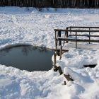 Рядом пруд, где водятся моржи